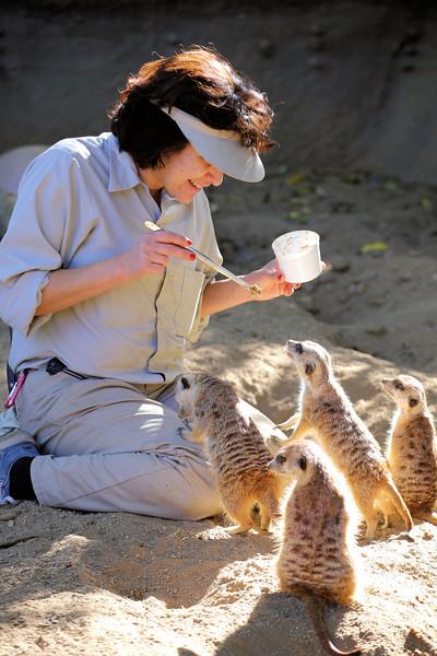 meerkat feeding.jpg