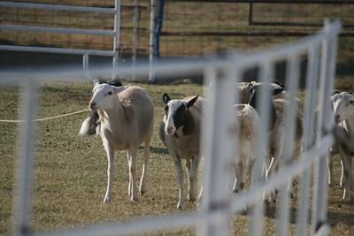 Herding Clinic October 2015