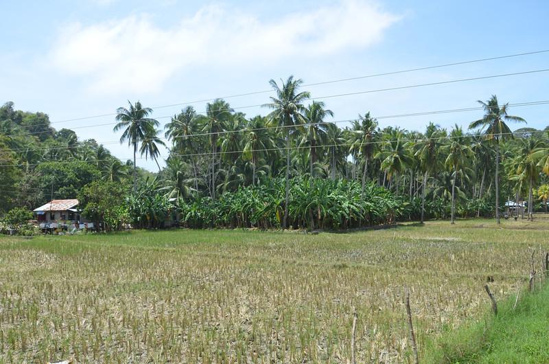 DSC_7373-rice-paddy.JPG