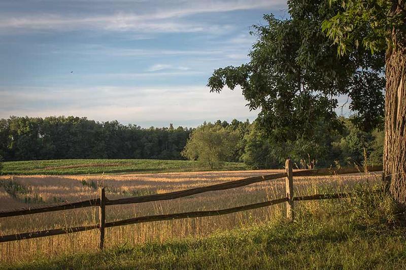 Z73A9220-fence-n-tree-www.jpg