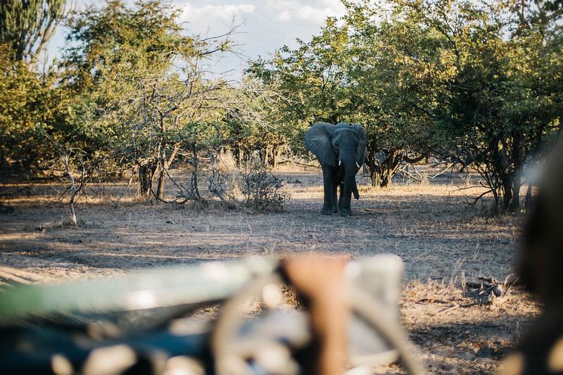 2019_06_24_Global_Malawi_ASJ_D01_Safari-28.jpg