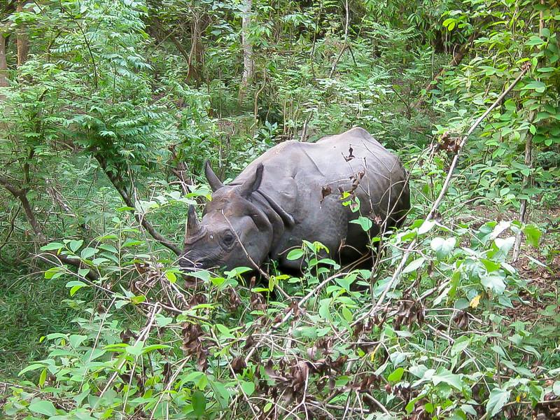 Chitwan 036.jpg