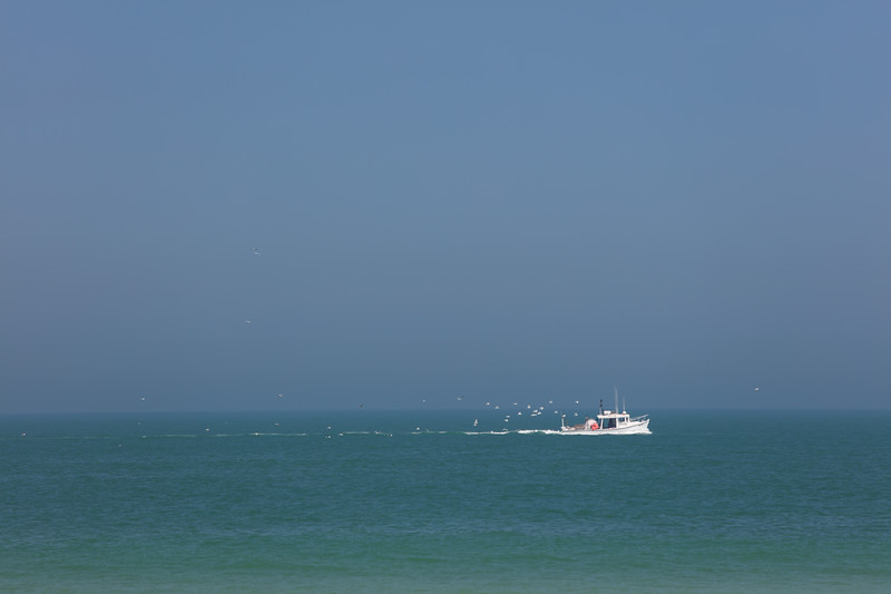 Gulls Following Trawler on the Ocean