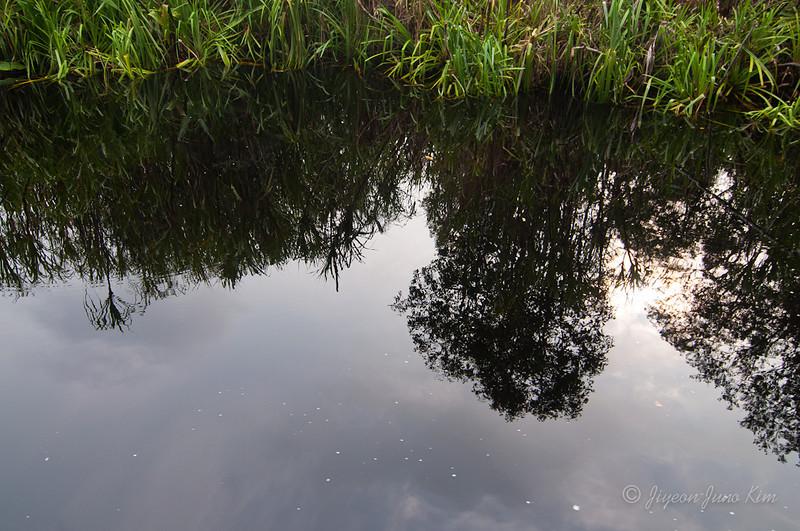 Borneo-jungle-7563.jpg