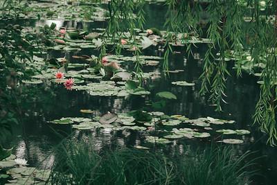 Monet & Impressionists