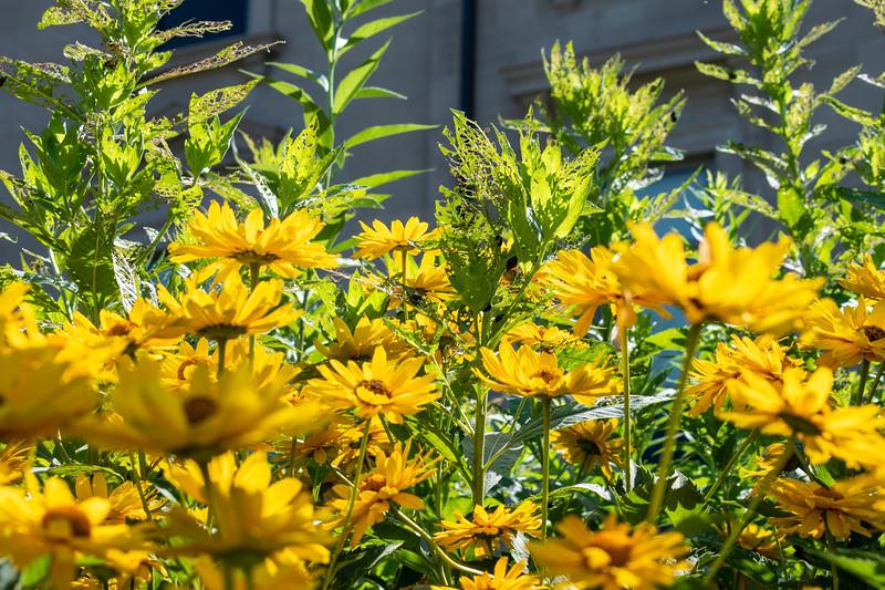 07_02_2019_Campus_Flowers_DSC_0134.jpg