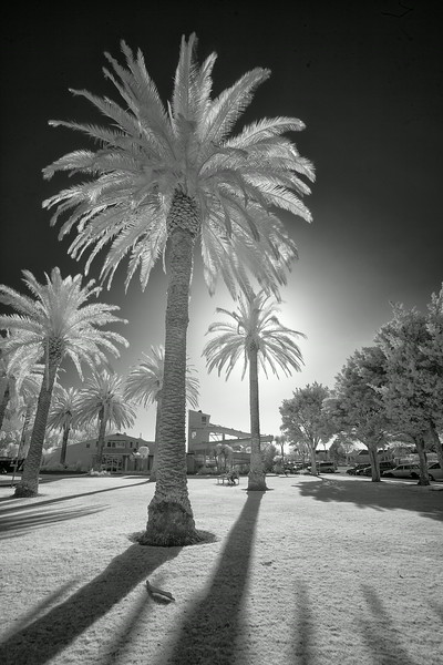 Palm Trees in Levin