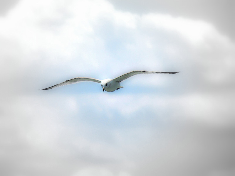 Spirit of Norfolk (43).jpg