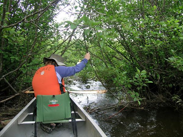 Blackwater Through Canaan Wildlife Refuge, WV 7/2006