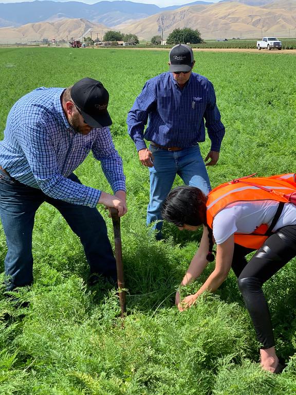 Bolthouse Farms carrot farmers
