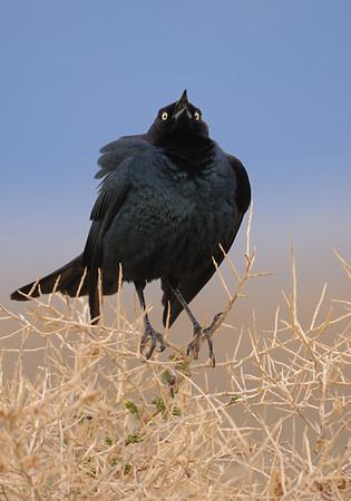 Alamosa National Wildlife Refuge