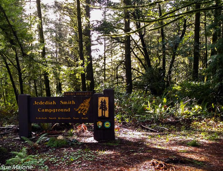 02-13-2021 Redwoods and Coast from Deborah-7.jpg