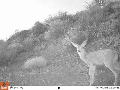 Wildlife cam 8/4/15-8/6/15