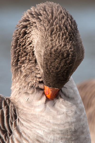 sugarcreekwaterfowl (200 of 6).jpg