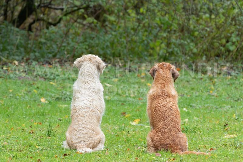 Dogs-4672.jpg