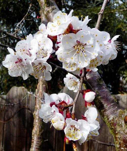 spring flowers-1000748.jpg