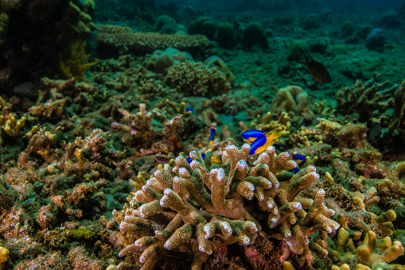 Taken at Tafraka divesite in Hiri Island, North Maluku, Indonesia during our 8D7N excursion in March 2018