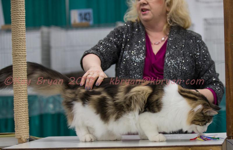 CatShow2014090_1.jpg