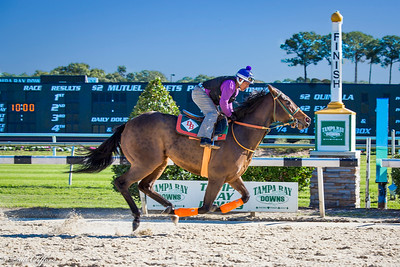 Images from folder Tampa Bay Downs (2)