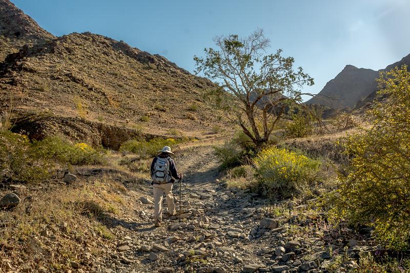 Hiker near El Camino Del Diablo #7