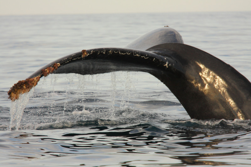 Mexico_Cabo_Whales 13.JPG