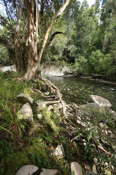 Innisfail, Australia. Photo by Trent Williams