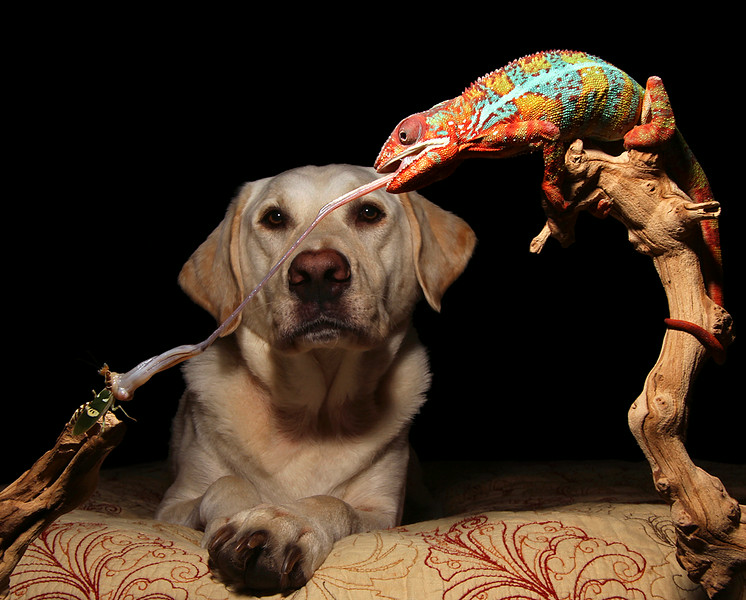 Chameleon, Dog, Mantis.jpg