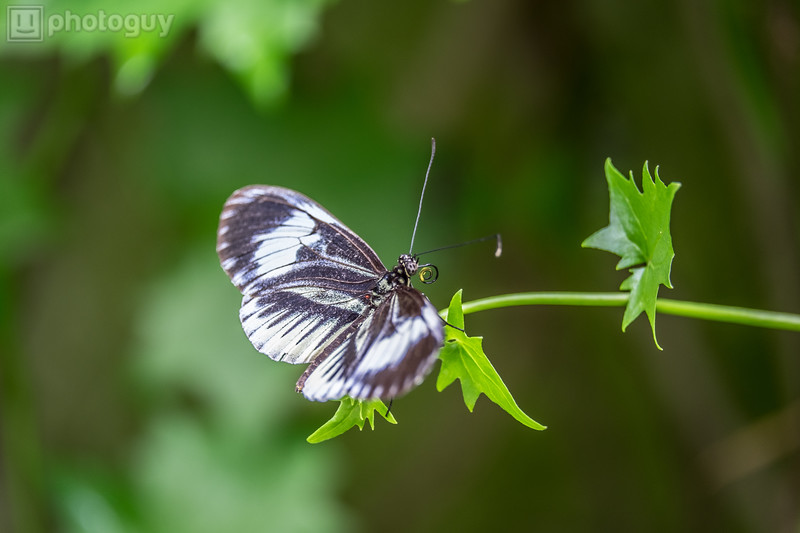 20140628_BUTTERFLY_WORLD (2 of 28)