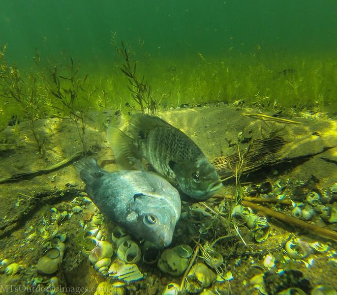 fish spawn2e (1 of 1).jpg