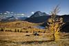 """Autumn at Healy Pass"" IX, Banff National Park, Alberta, Canada."