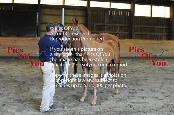 Foal entry 2