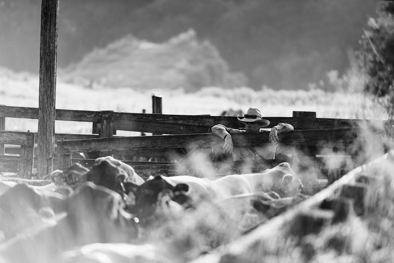 Barthle Cattle-2 (3 of 102).jpg