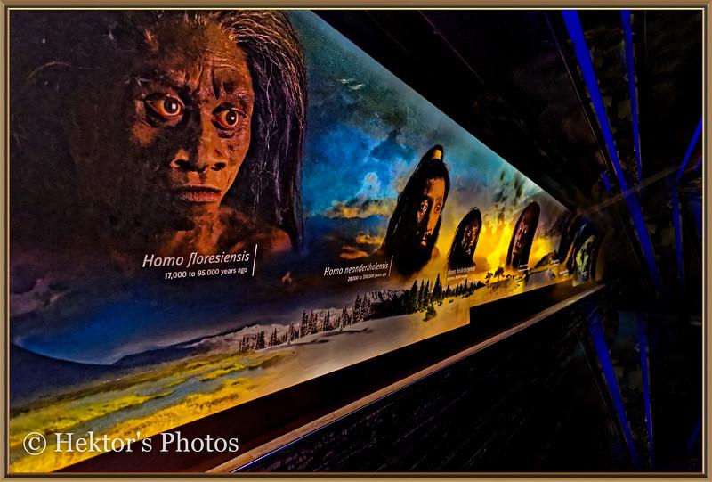 National History Museum-8.jpg