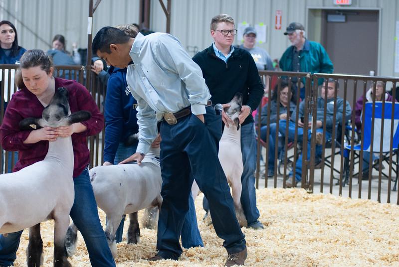 kay_county_showdown_sheep_20191207-93.jpg