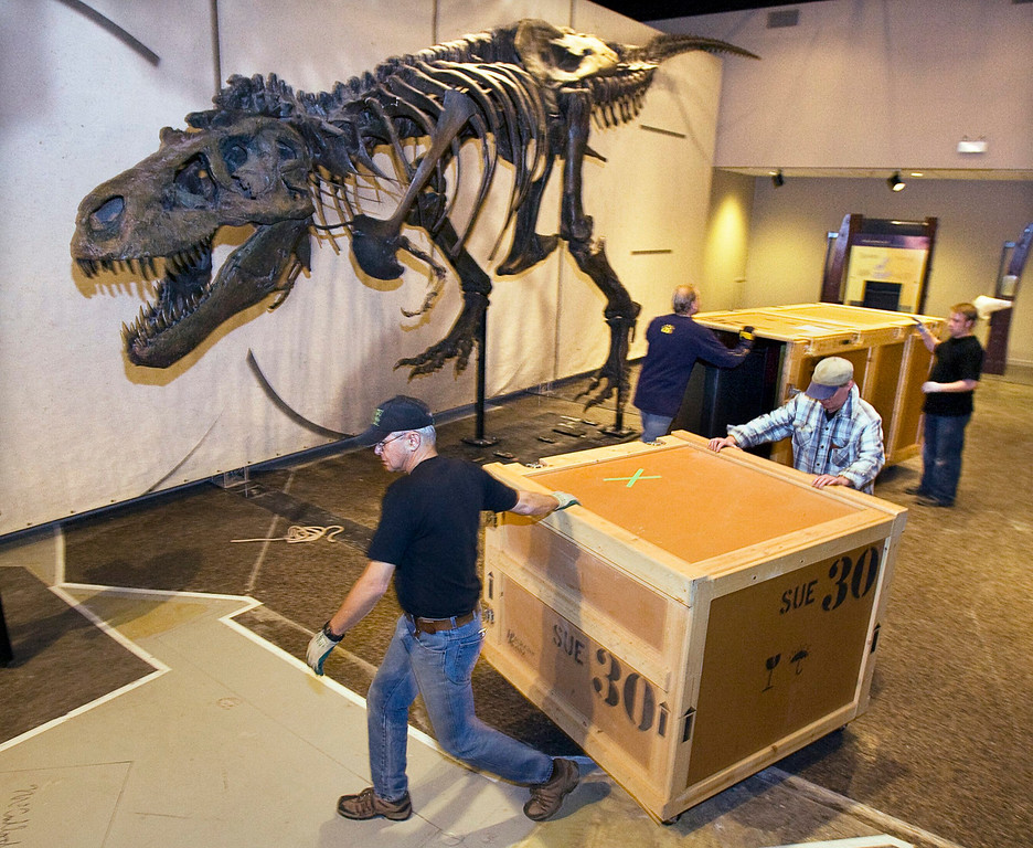 . Workers move a shipping case at the Museum of Natural Science after installing Sue, claimed to be the largest, most complete, and best preserved Tyrannosaurus rex, in Halifax on Wednesday, Jan. 12, 2011. Sue is named for paleontologist Sue Hendrickson, who discovered the dinosaur remains during a fossil-hunting trip in the summer of 1990. (AP Photo/The Canadian Press, Andrew Vaughan)