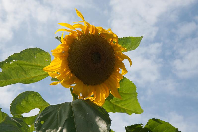 2009 09 06_White Flower Farm_0123.jpg