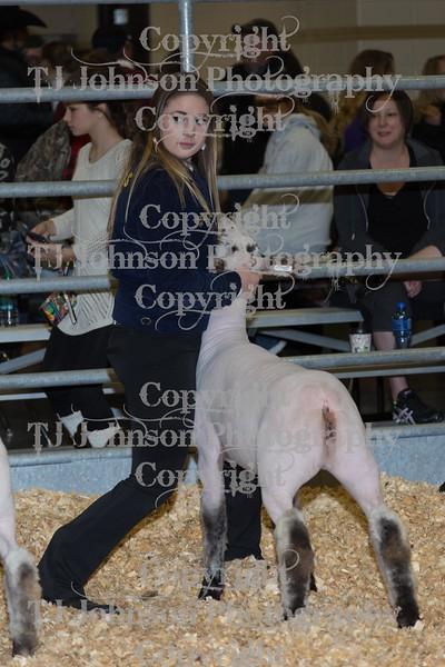 2016 KISD Lamb Show Class 3