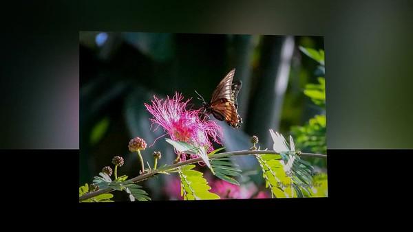 Dec-Jan 2020 Backyard Nature Video