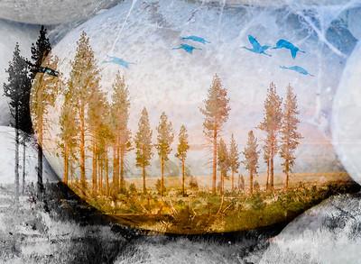 Tree Sentinels