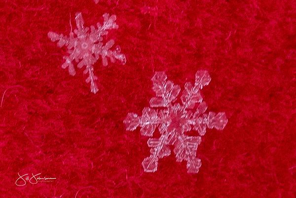 snowflakes-2467.jpg