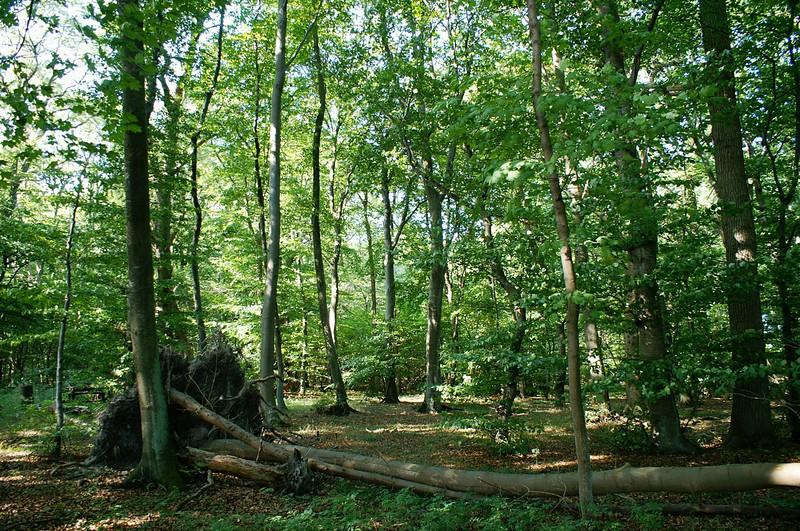 Fra en af de private skove