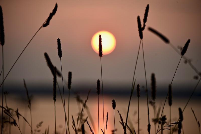 weed silhouette.jpg