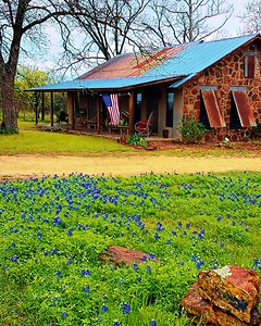 Bluebonnets near Ft. Mason
