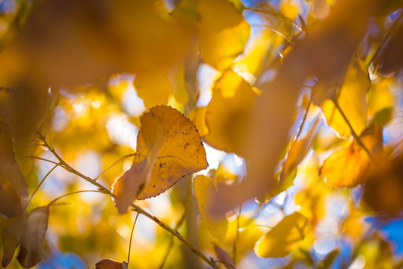 20151024-Fall Colors-106.jpg