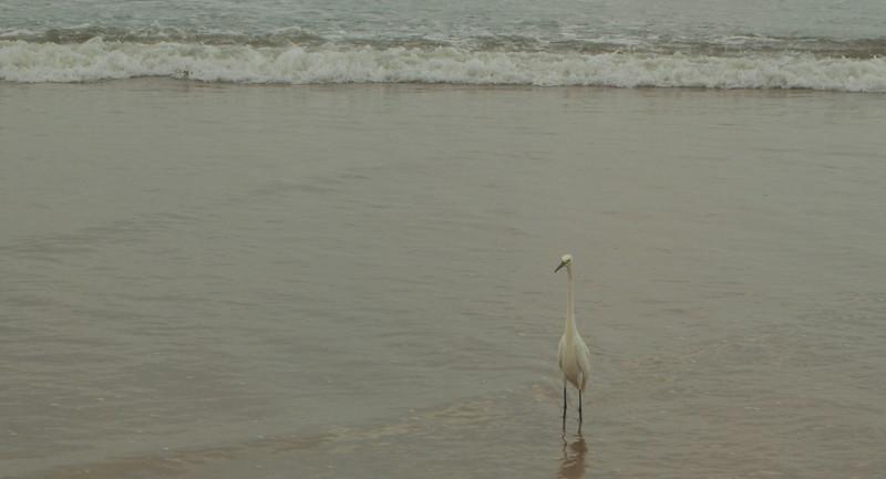 20 The Ocean is for the Birds Ormond Beach.jpg