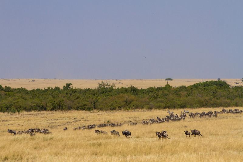 2013-Kenya2013-0722-0234.jpg