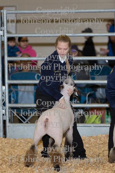 2018 KISD Lamb Show Class 2