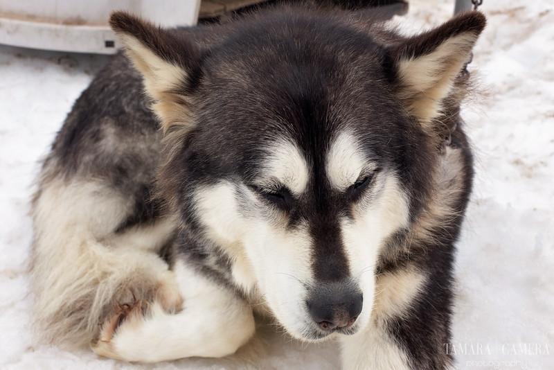 Dog Sledding8-3-2.jpg