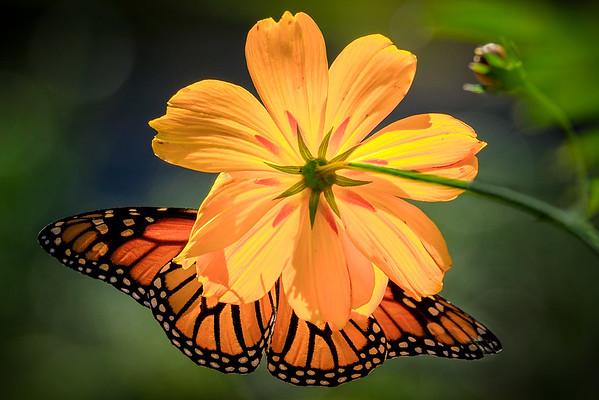 Flower & Flora