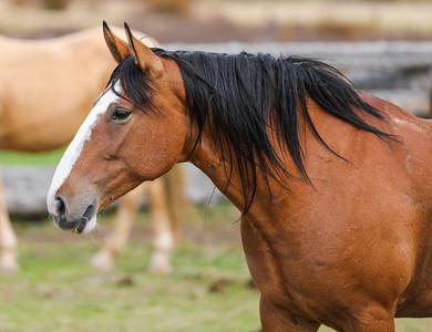Rescue Horses @ Wiggins Fork